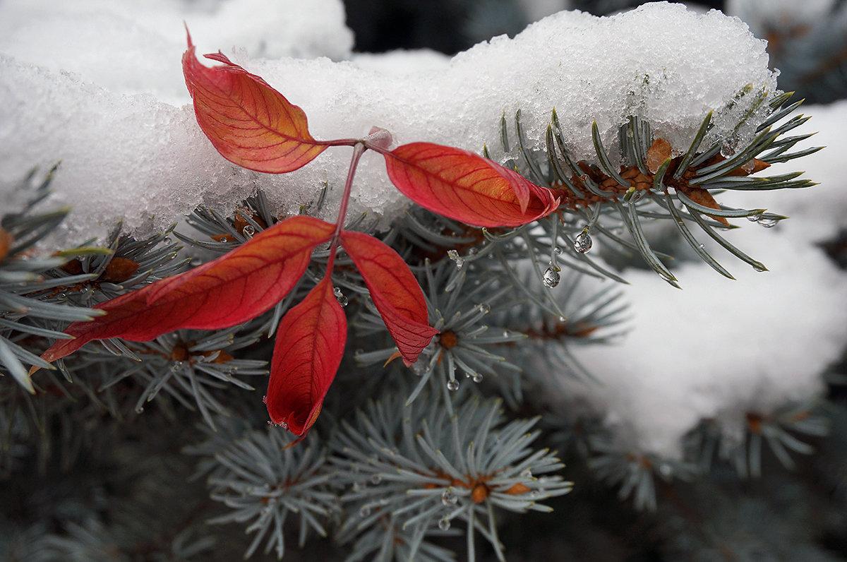 Зима и осень в дружеских объятиях... - Екатерина Торганская