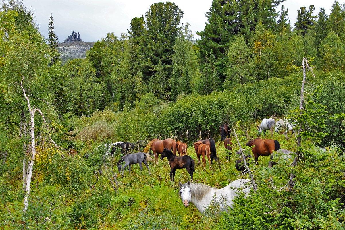 Лошади в горах - Сергей Чиняев