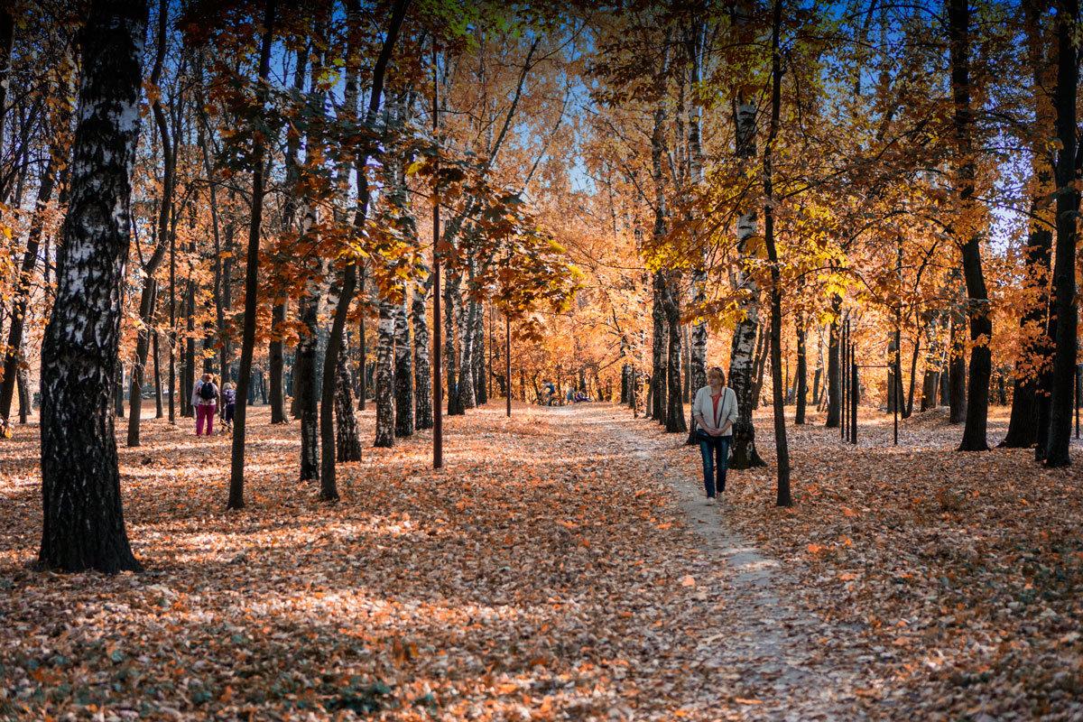 Осень в парке - Александр Табаков