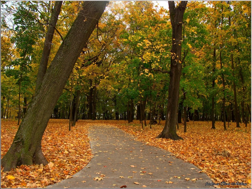 Осенний парк - °•●Елена●•° Аникина♀