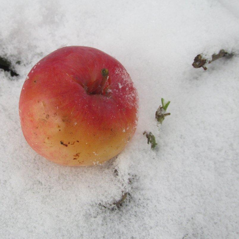 ...яблоко на снегу... - Galaelina