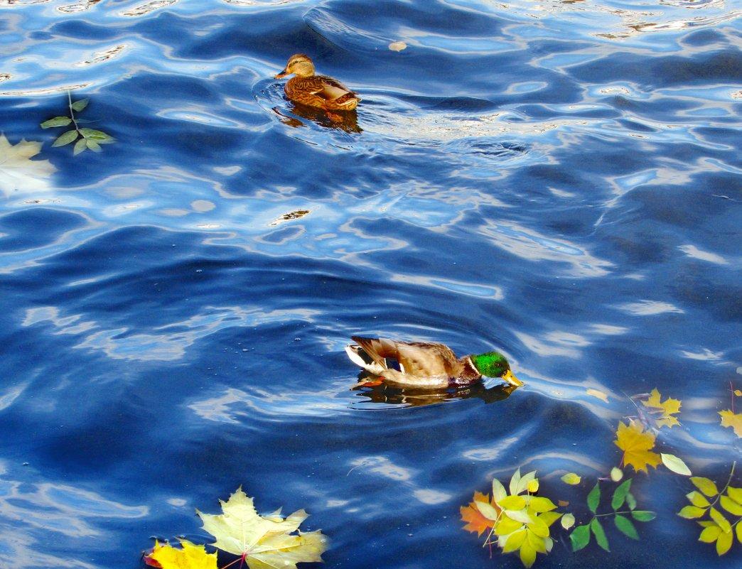 Октябрьский солнечный день на Волге - Светлана Соколова