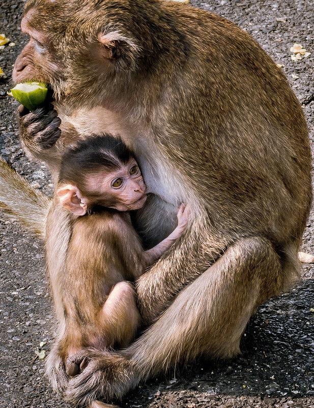 Mother and child. - Илья В.