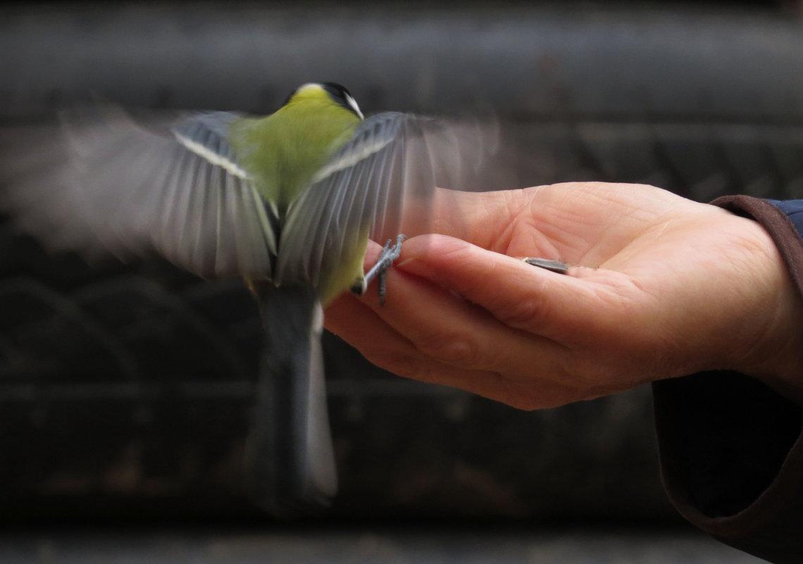 Птицы осенью становятся доверчевей - Ната Волга