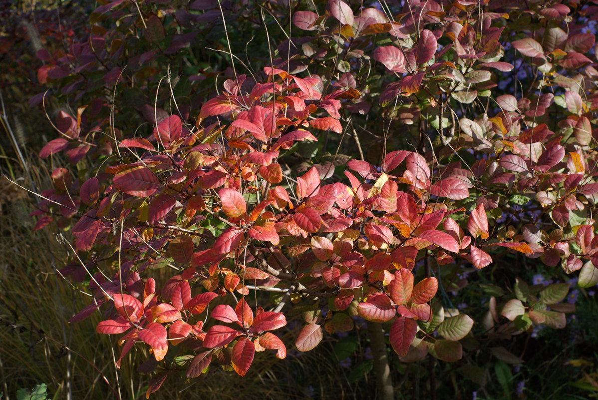 Красные листья - Игорь Шубовичь