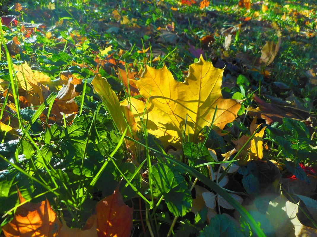 Золотая осенняя пора - Gerchiana