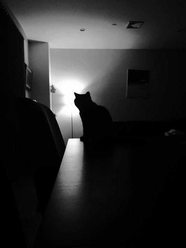 Тени в ночи - Эмма