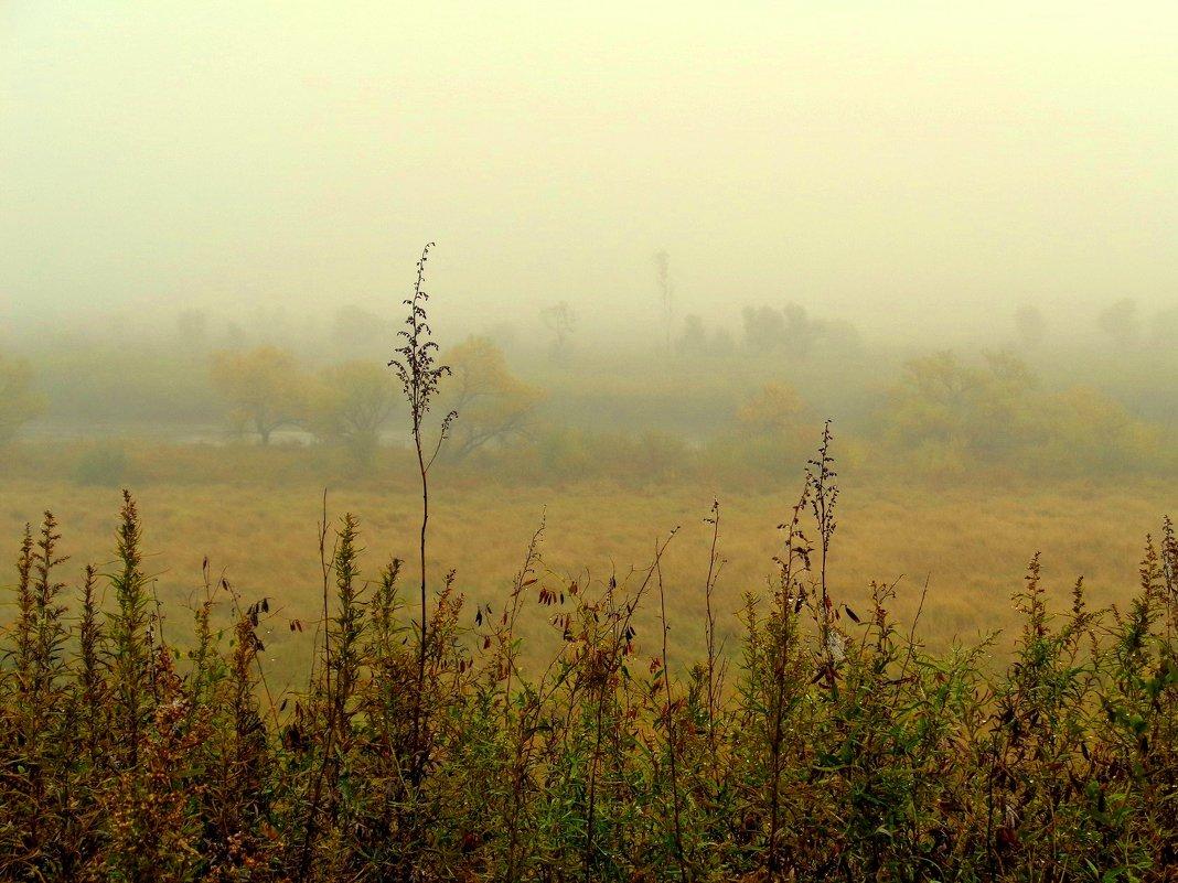 Осенний туман - Милла Корн