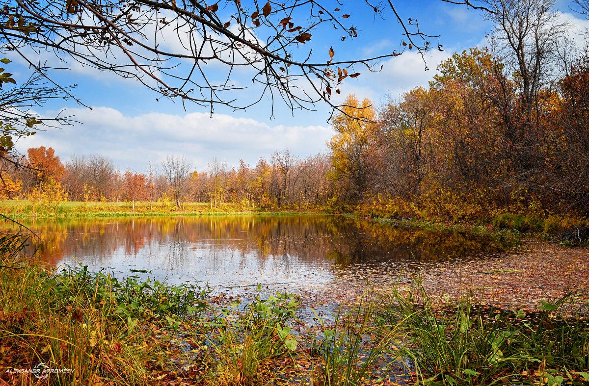 Озеро в лесу - Александр Афромеев