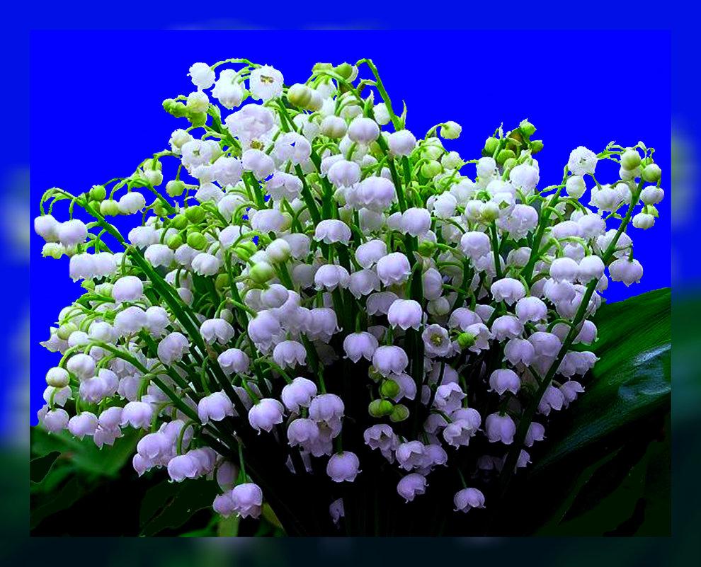 Весна - Владимир Хатмулин