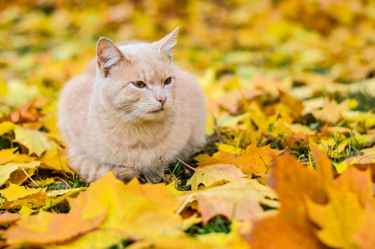 Кошка - Марина Романова