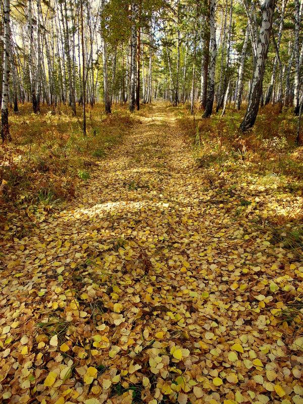 В осень уводит дорога. - nadyasilyuk Вознюк