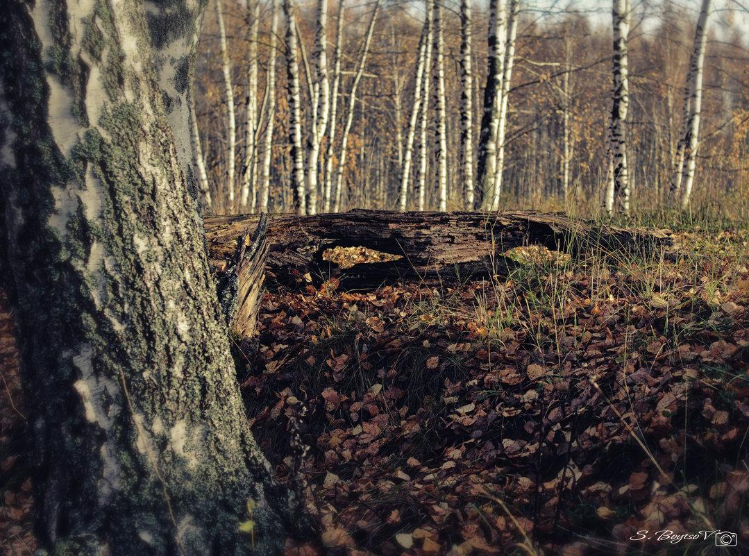 глаза... ты смотришь на природу и природа смотрит на тебя... - Сергей Бойцов