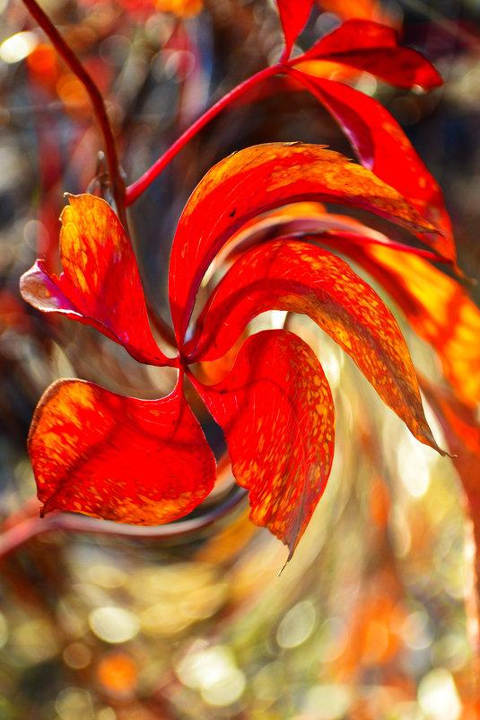Рыжая осень - Nina Streapan