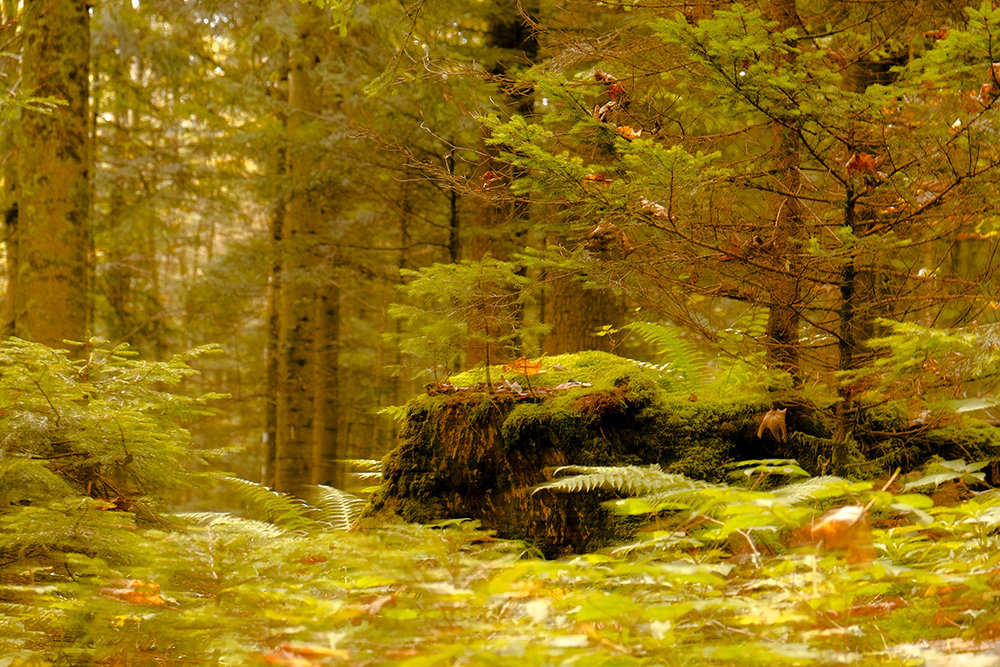 Сказочный лес - Наталья Рыжкова