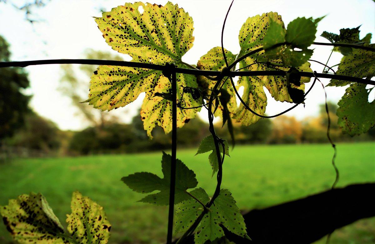 Вуаль осенних листьев - Валерий Розенталь