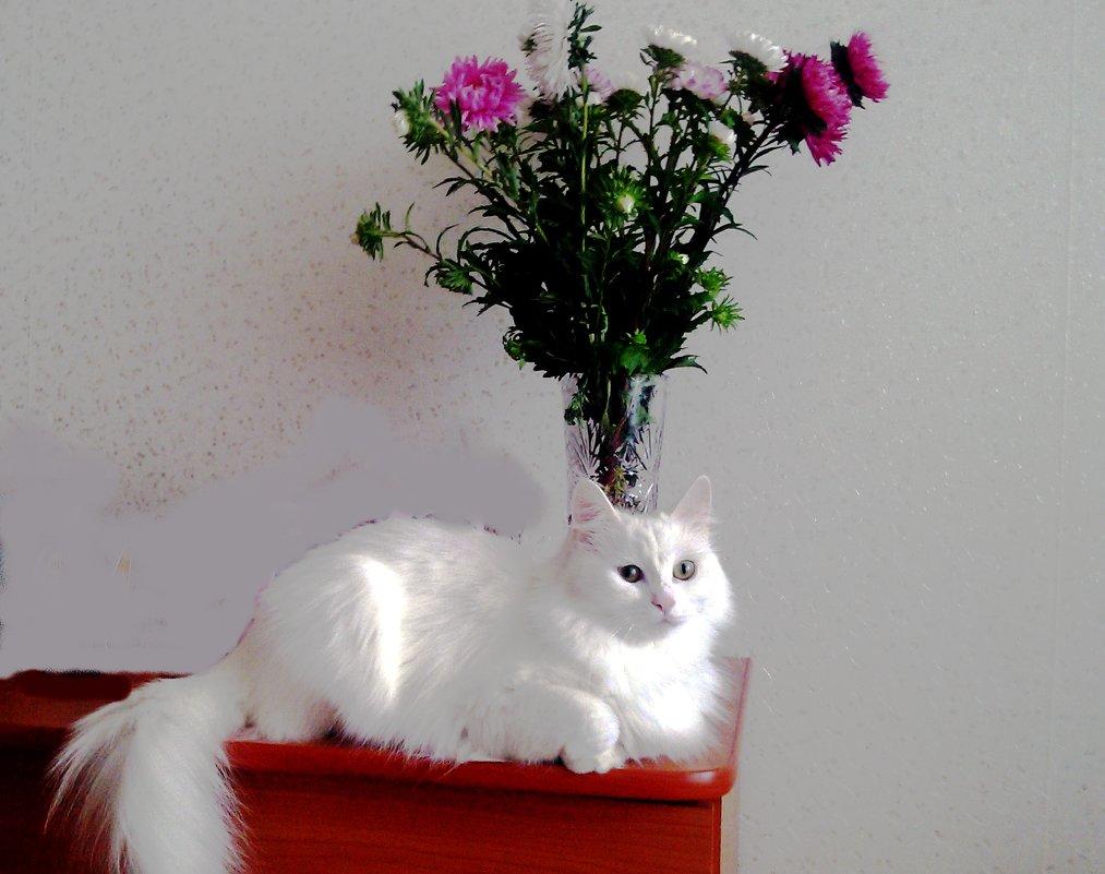 Кошка и букет - Владимир Ростовский