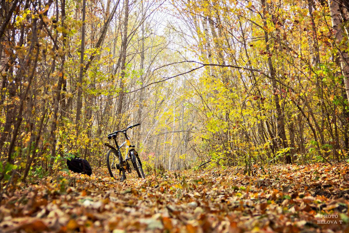 в осеннем лесу - Tatyana Belova