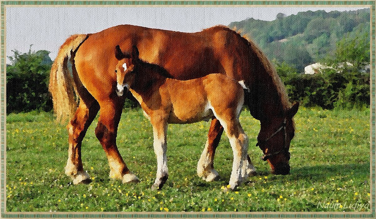 Рисую лошадей - Лидия (naum.lidiya)