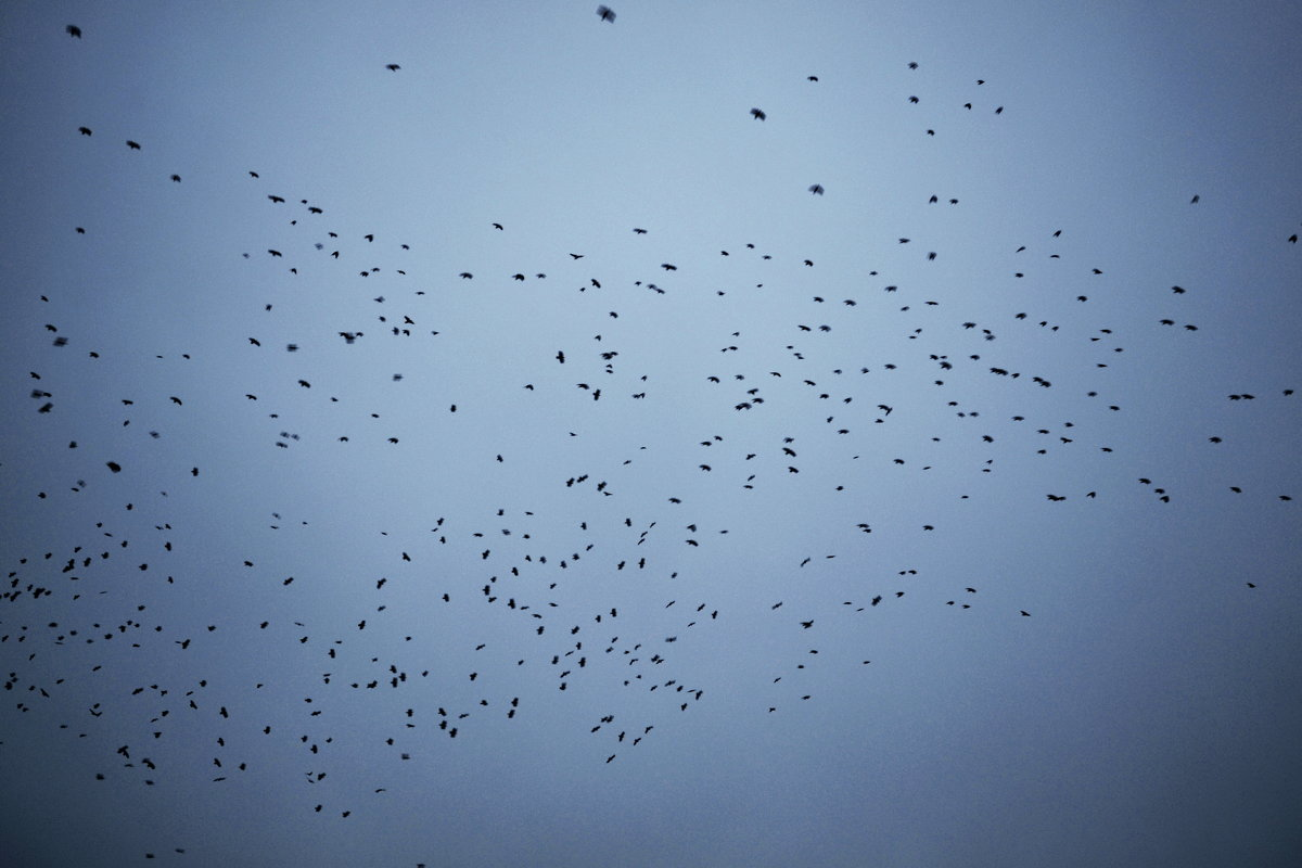 birds - Юля Рудакова