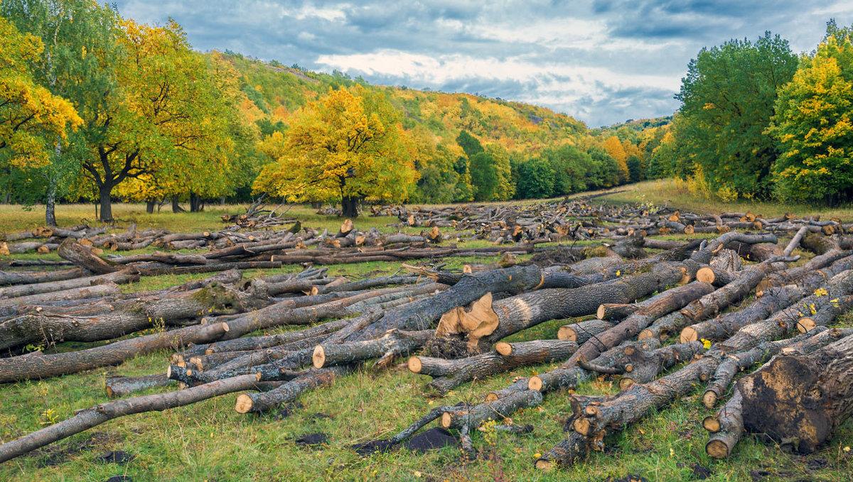 Лесозаготовка - Любовь Потеряхина