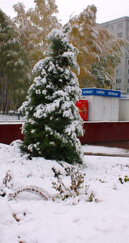 Туя - свеча из первого снега. - Наталья Золотых-Сибирская
