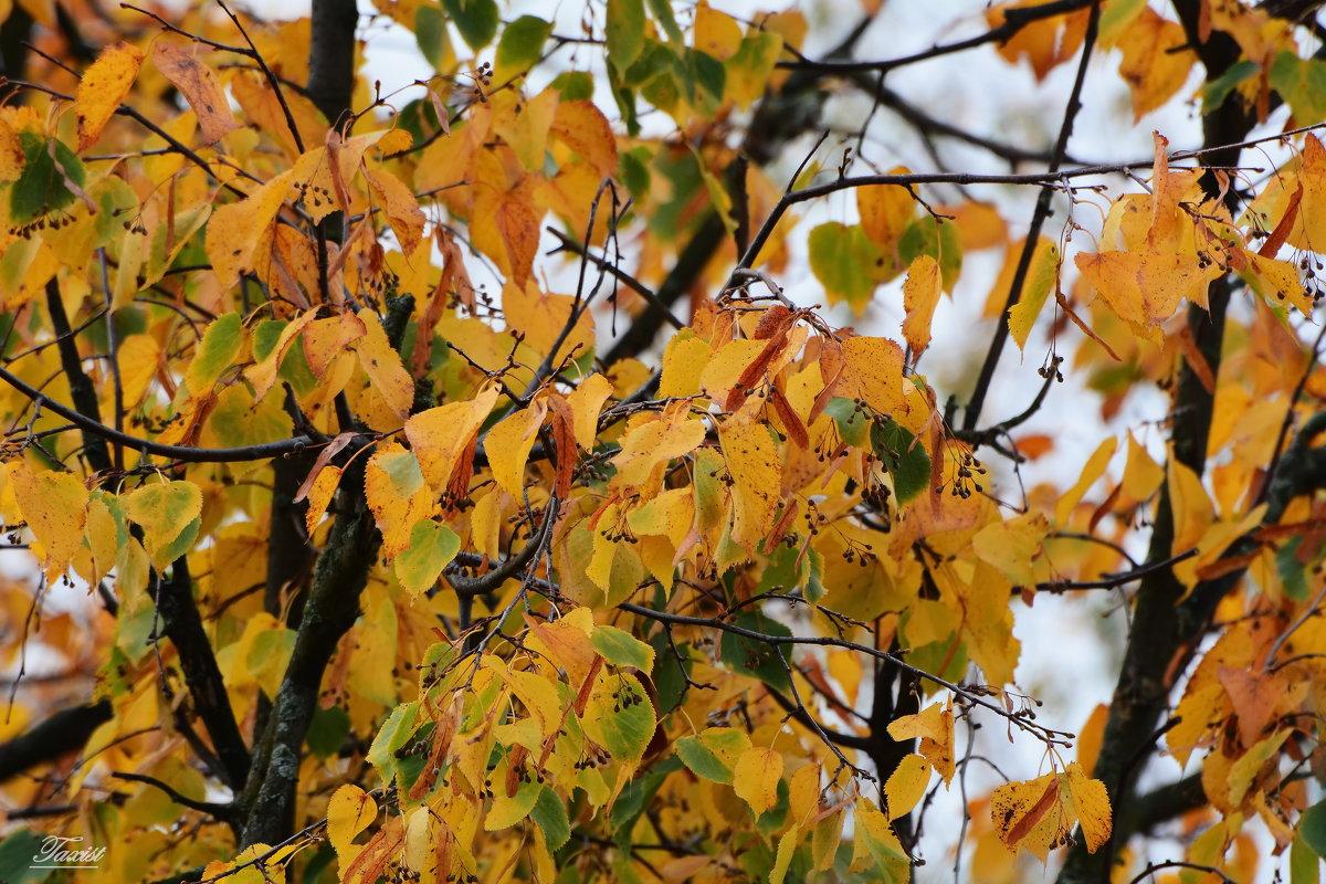 Краски Осени. - Paparazzi