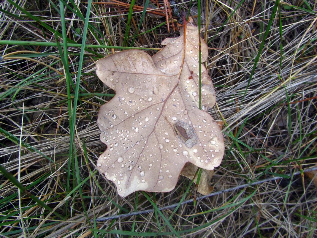 октябрь в лесу - tgtyjdrf