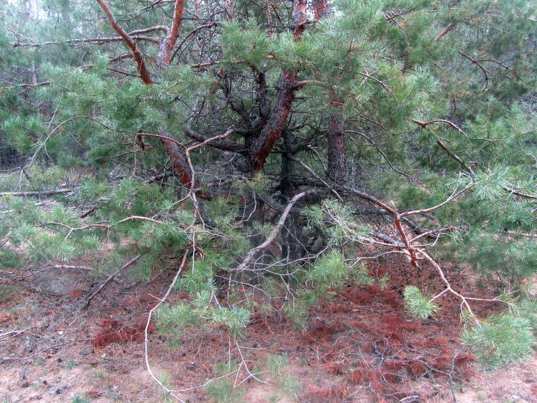 лес - tgtyjdrf