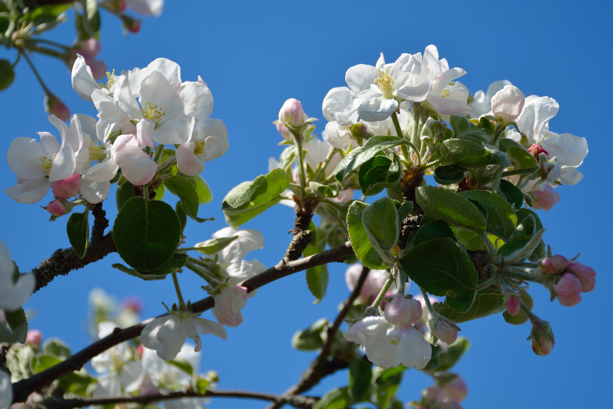 Весны цветенье... (этюд 7) - Константин Жирнов