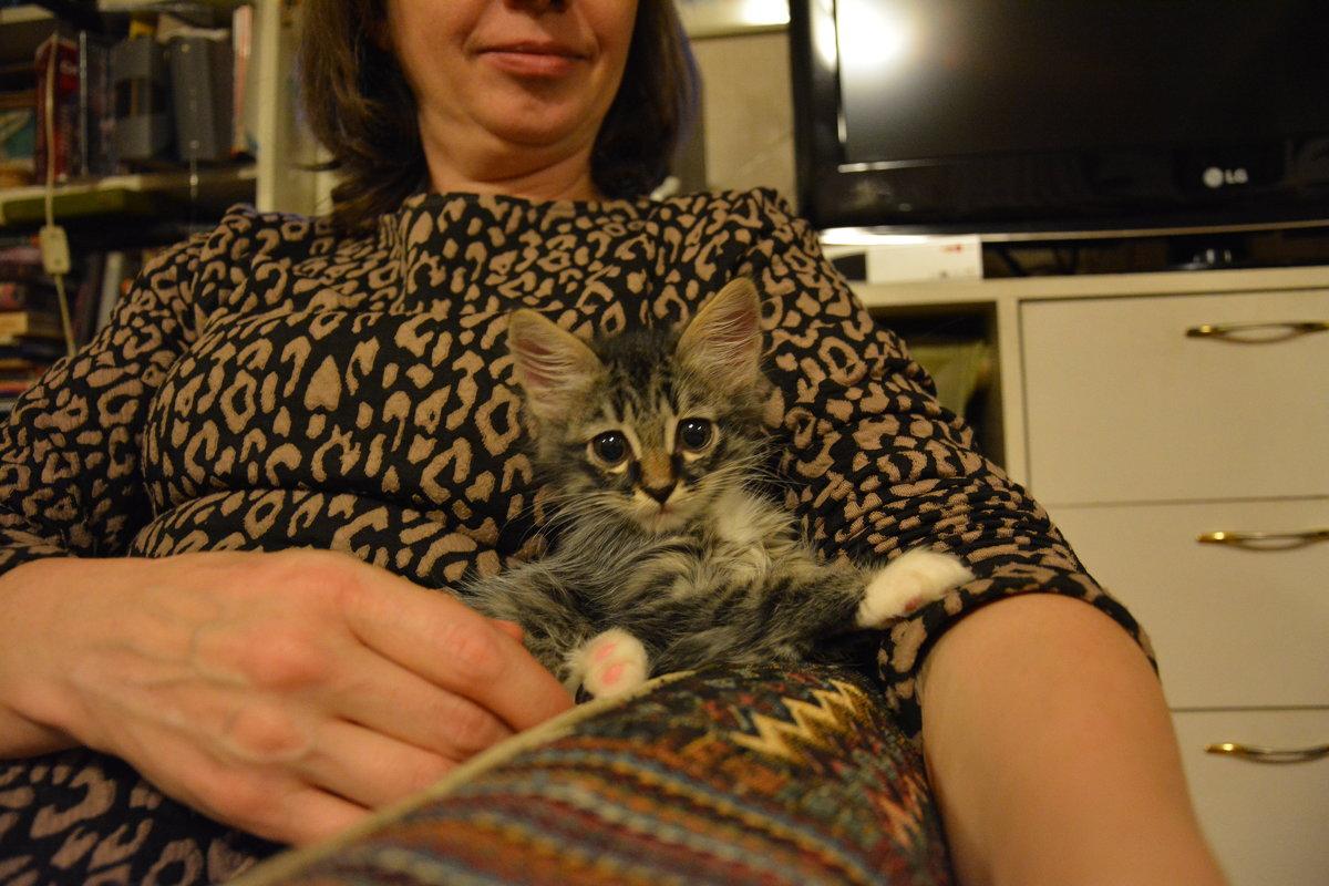 Котёнок на коленях - Сербина Анна