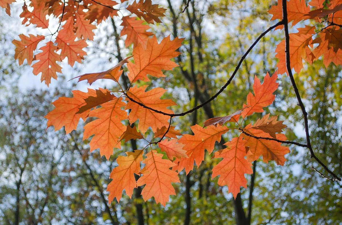 Огоньки осенних листьев - Сергей Тарабара