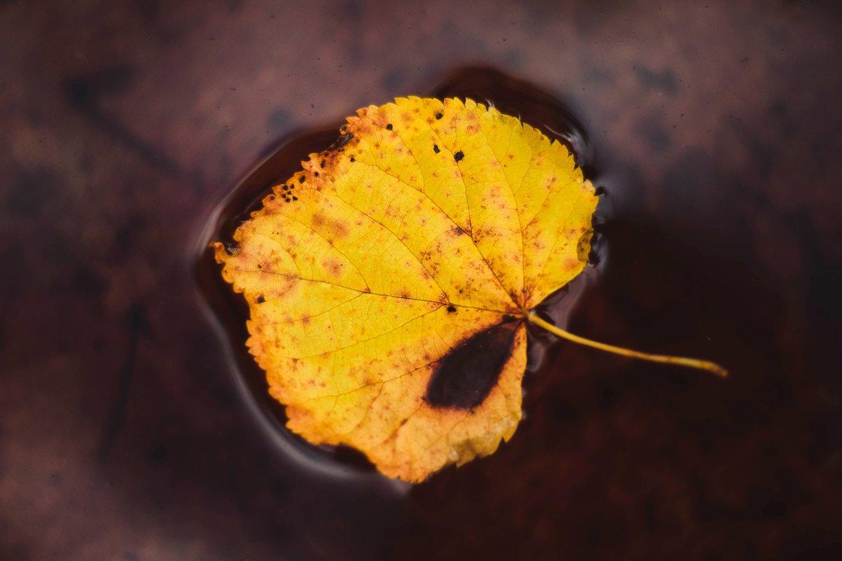 Осень - Дарья Семенова