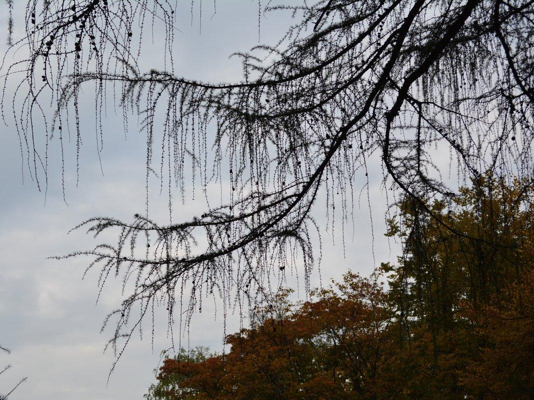 осень уже пришла - Ольга Заметалова