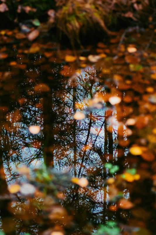 Отражение - Роман