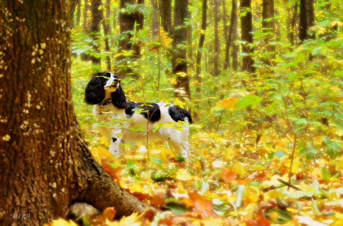 Осенняя сказка... - *MIRA* **