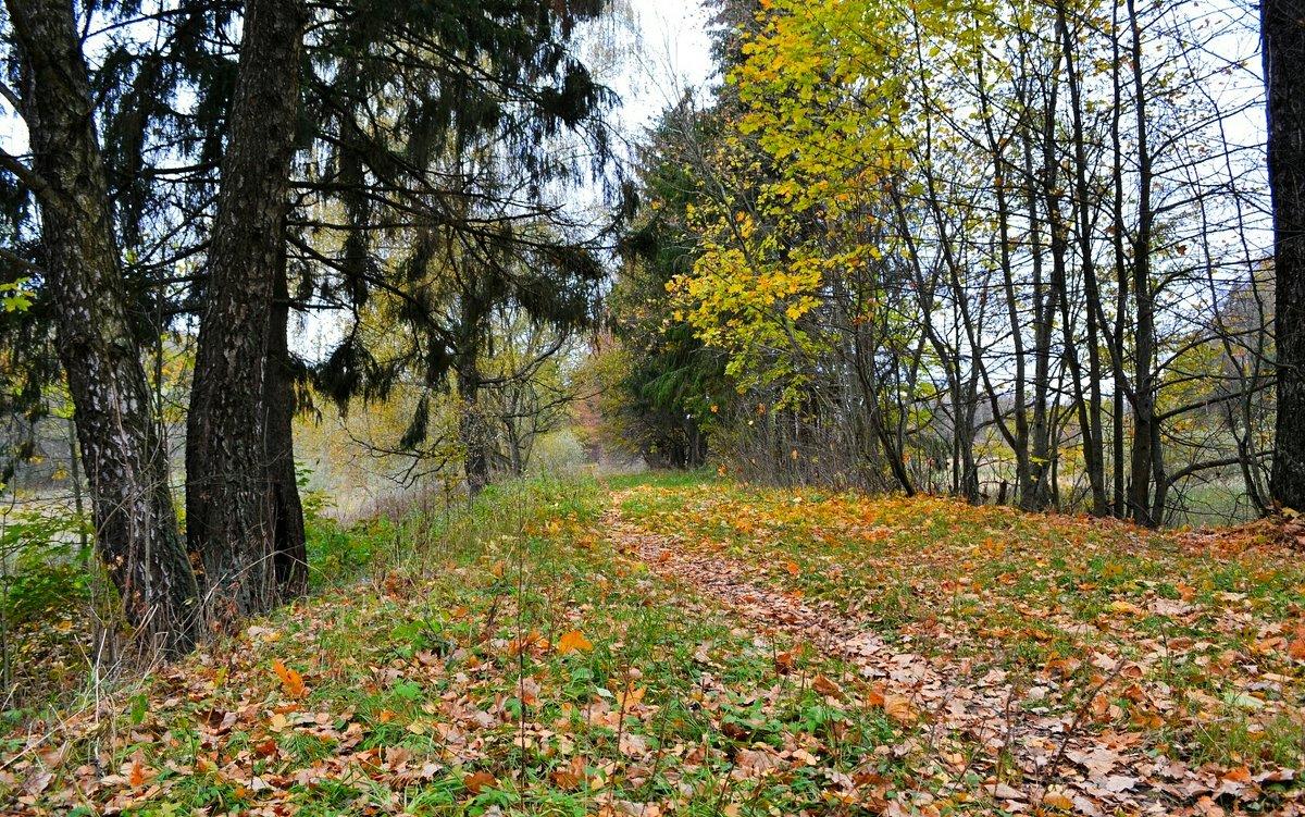 Осень на Смоленщине - Милешкин Владимир Алексеевич
