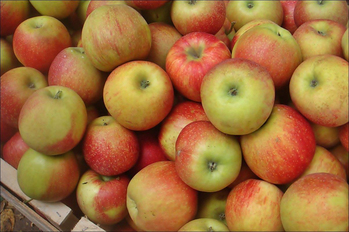 Яблочные россыпи - Нина Корешкова