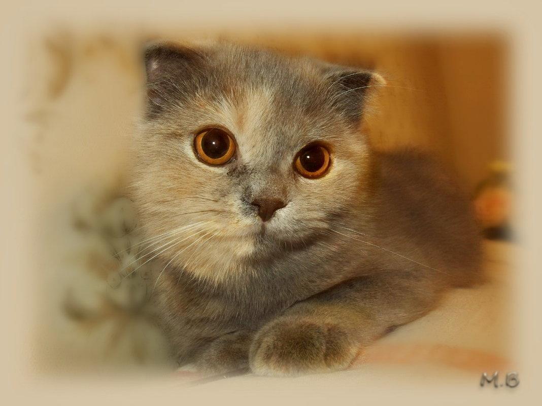 Знаешь, кошка твоя скучает... Очень тихо и про себя... - Людмила Богданова (Скачко)