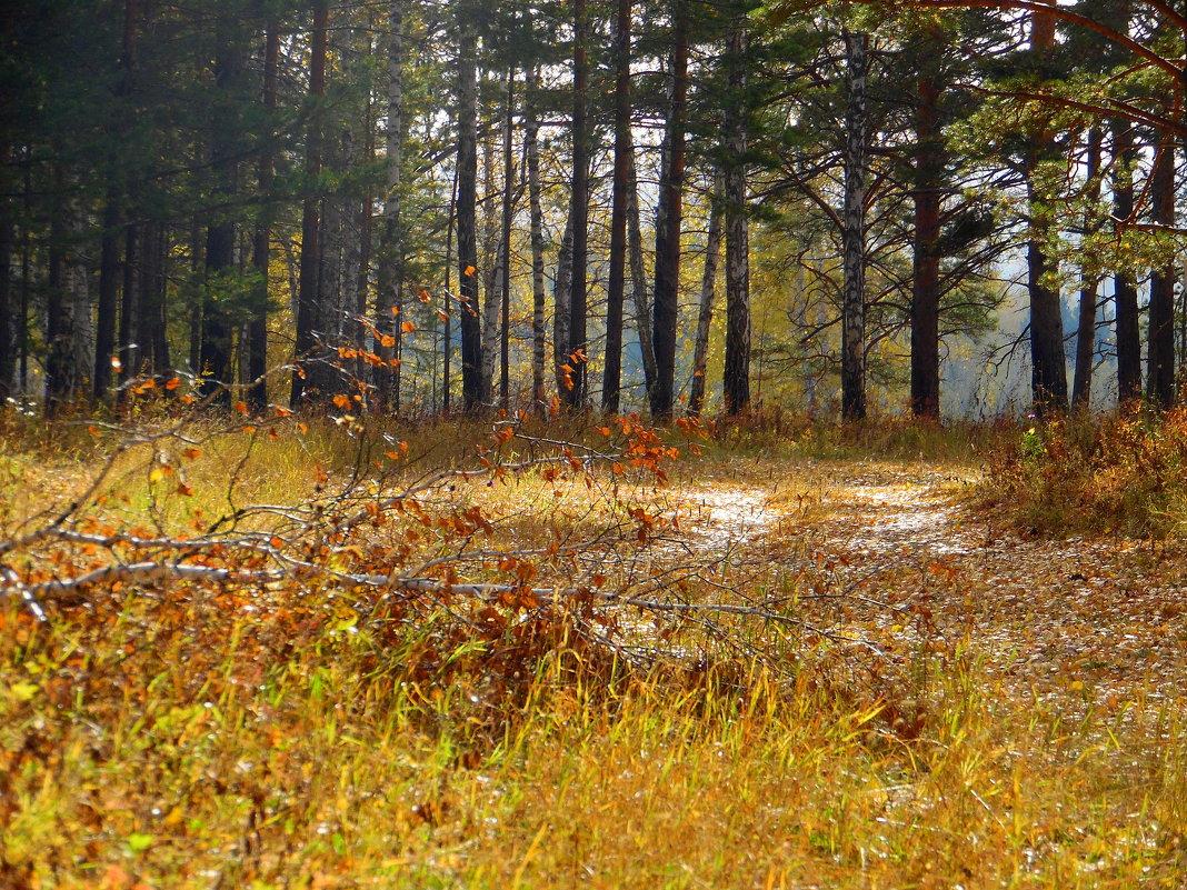 В лесу осеннем. - nadyasilyuk Вознюк