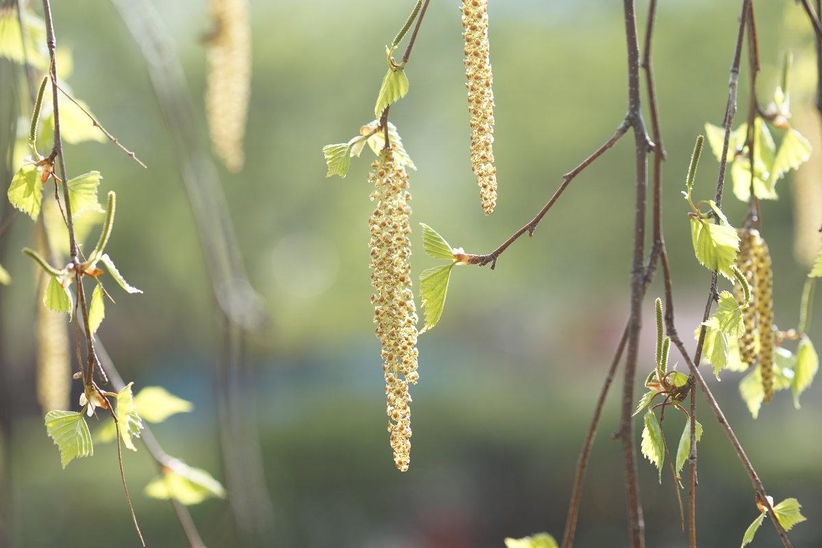 Весна - Константин