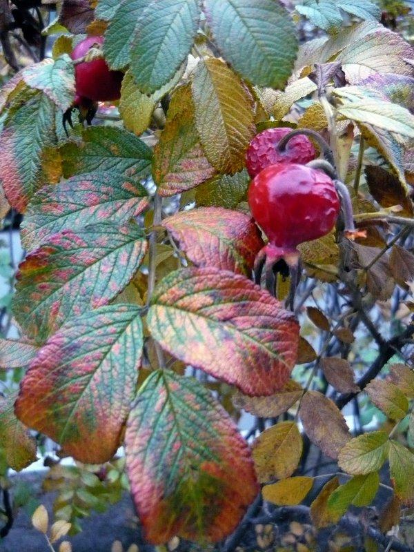 Красивая осень! - Вера Щукина