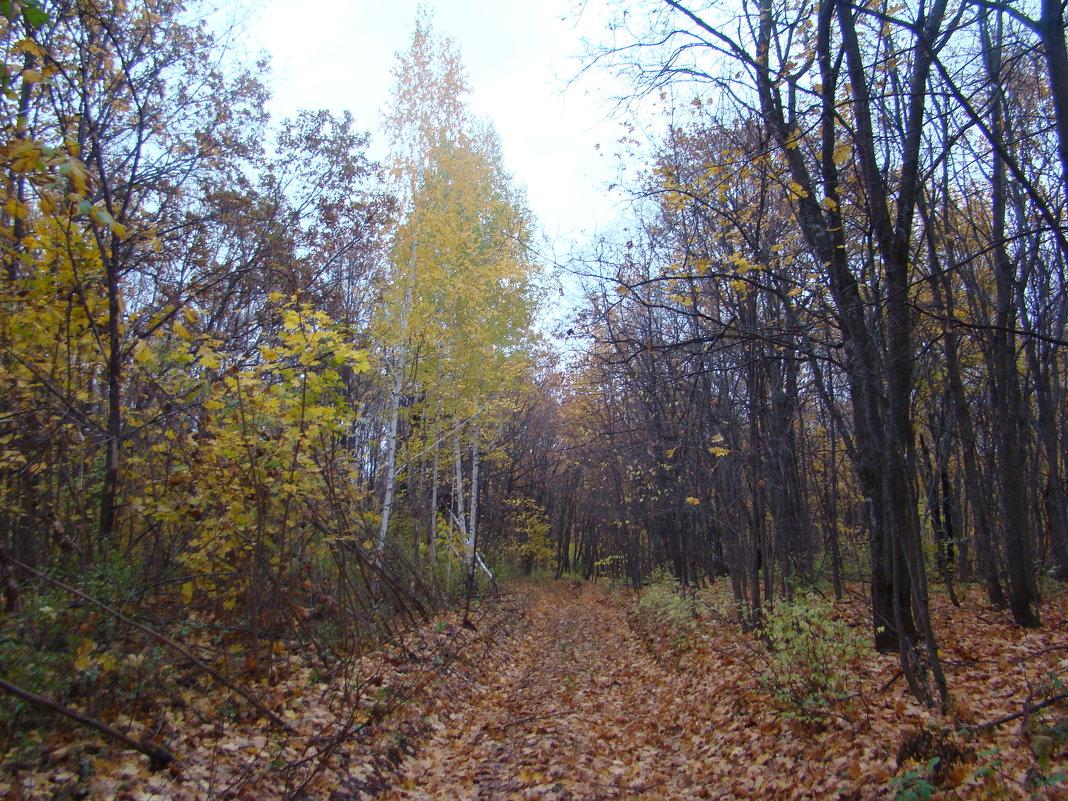 В лесу - марина ковшова