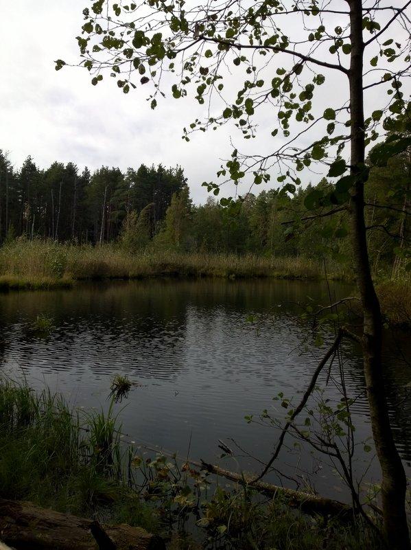 лесное озеро - Елена Иванкина
