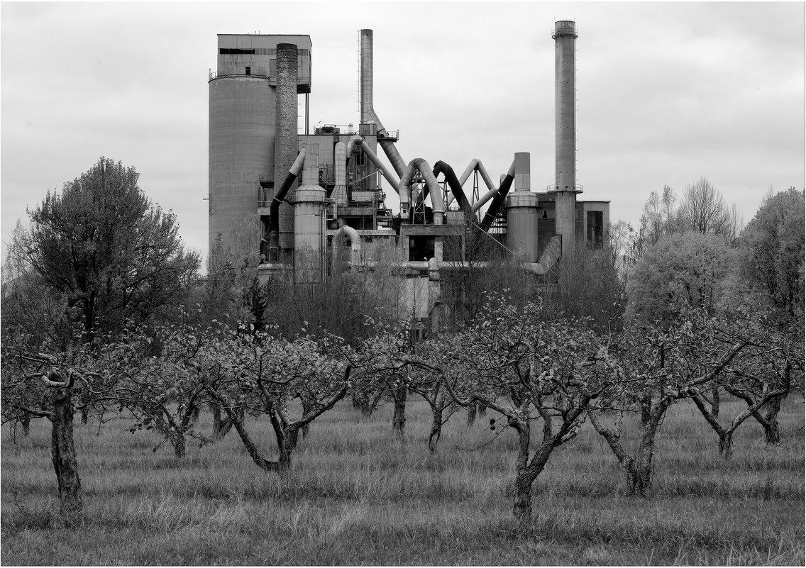 """"""" Там яблони растут..."""" - Eino Pessi"""