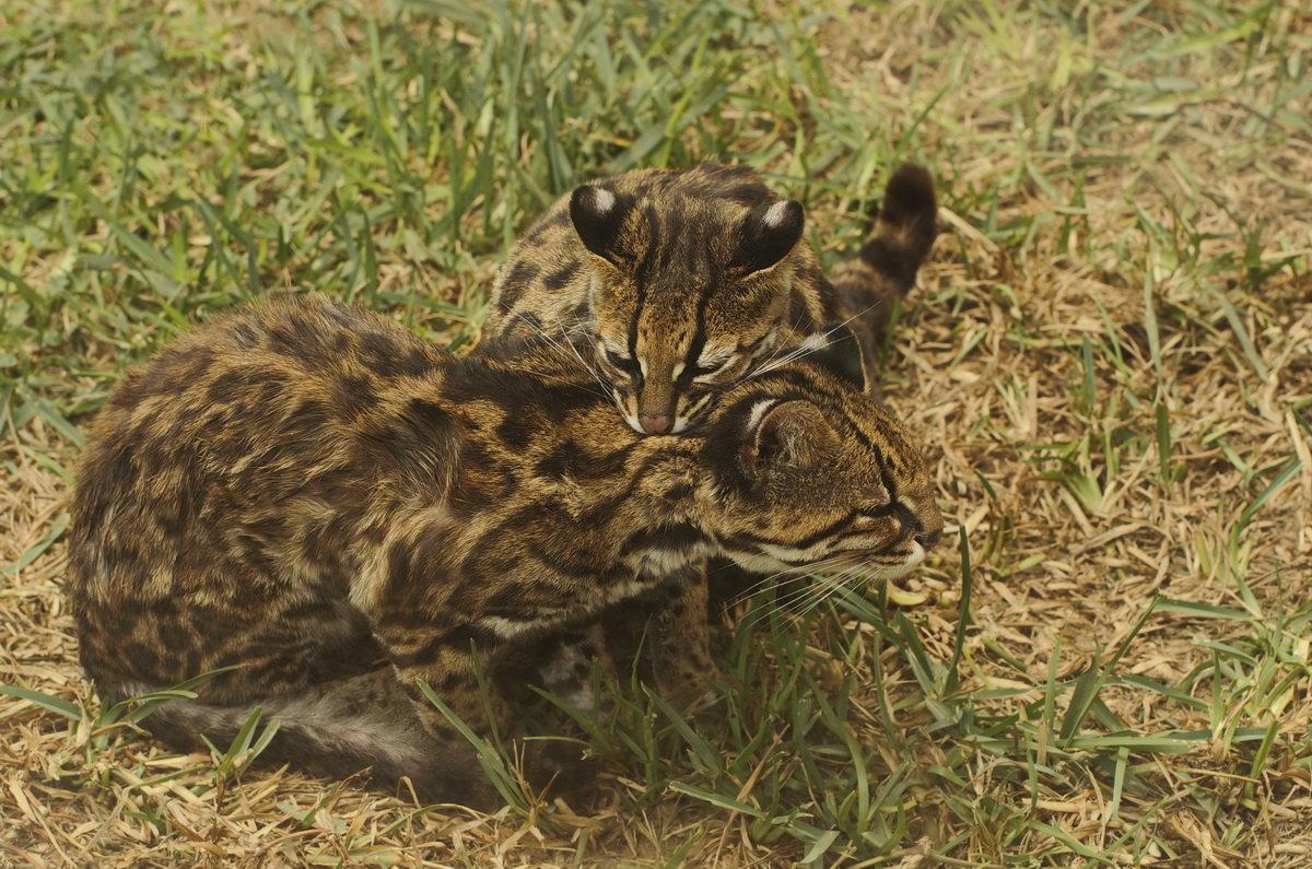 В зоопарке Лимы - Svetlana Galvez