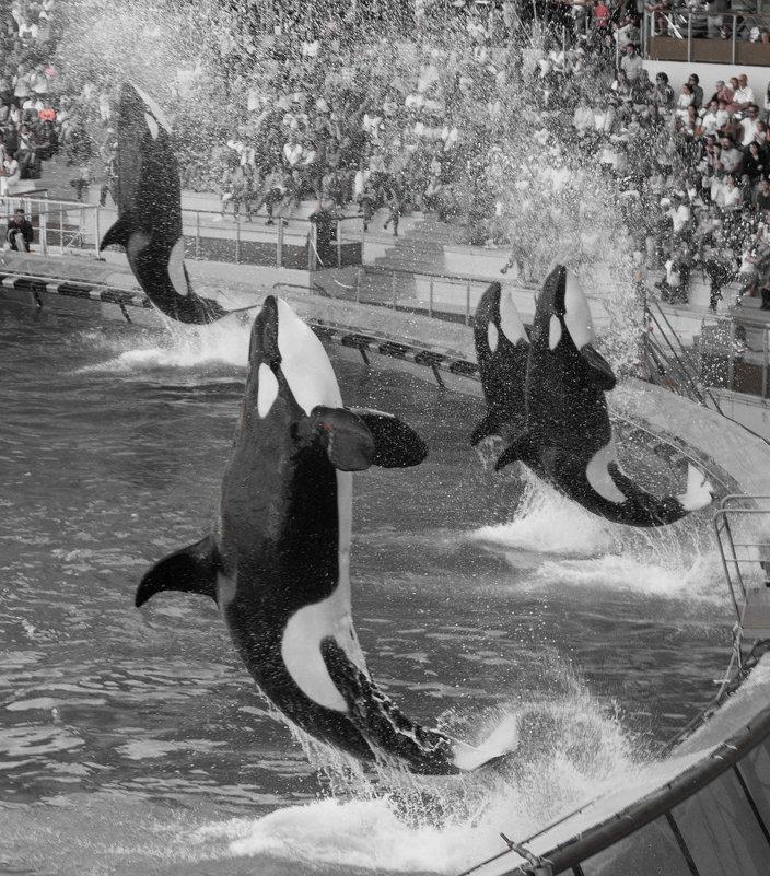 летающие французкие киты - Елена Заичко