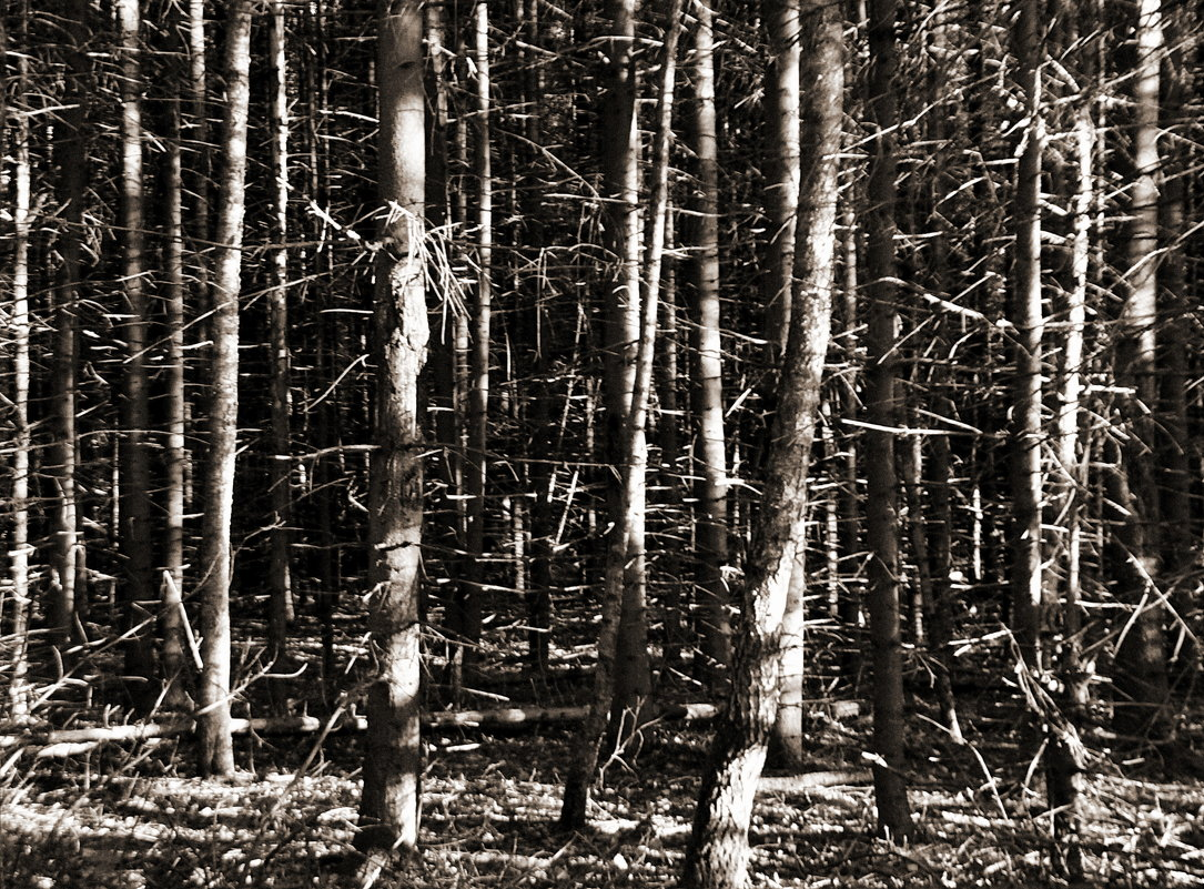 лес.... - Sergey Ganja