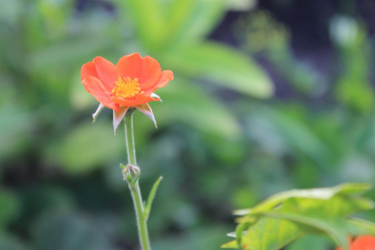 Весна - Альбина Козина