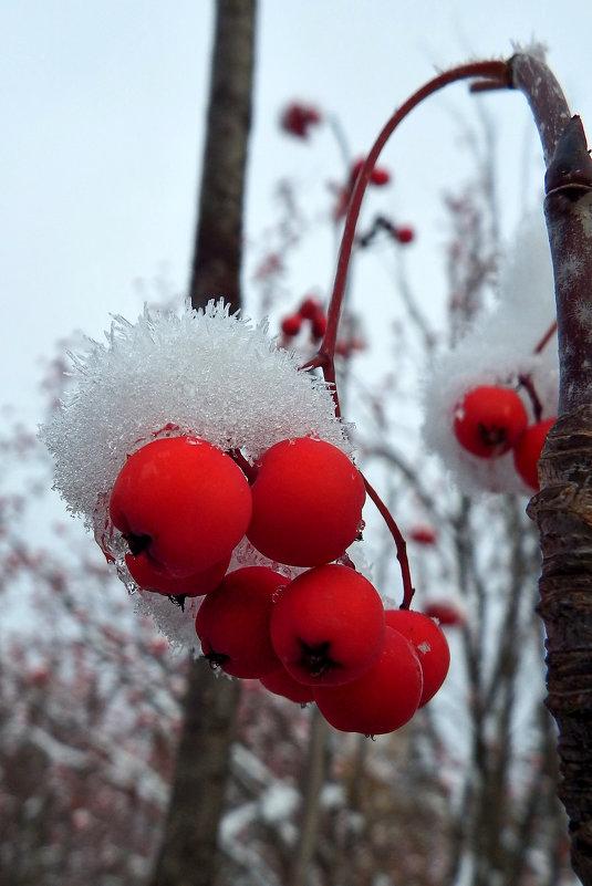 Первый снег - Сергей Комков